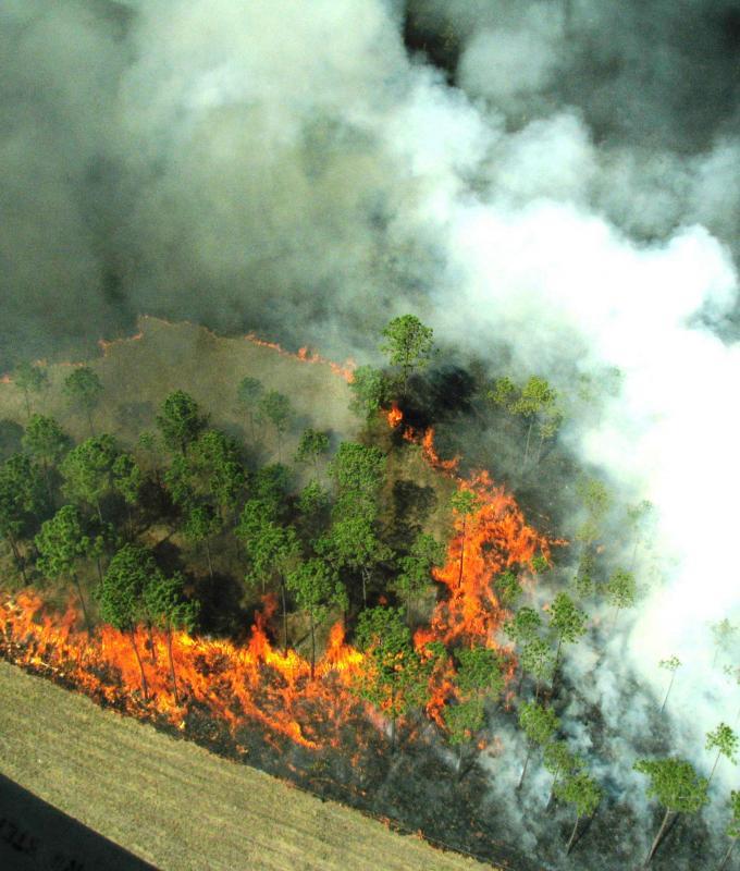 Attivazione della fase di attenzione per gli incendi boschivi